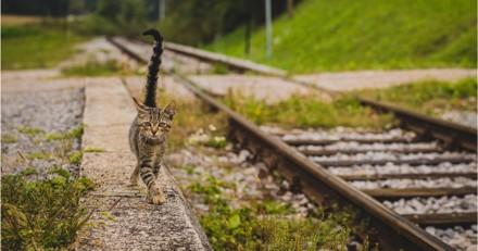 Il retrouve son chat disparu depuis 2 ans à 1500 km de son domicile !