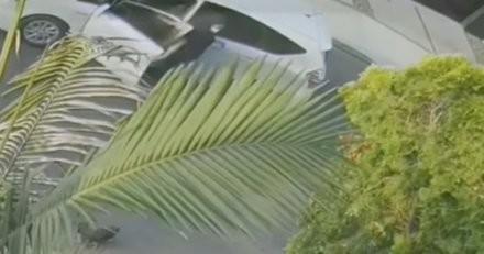 Le livreur s'approche de la maison pour livrer la commande, mais il se baisse et fait un geste révoltant (vidéo)