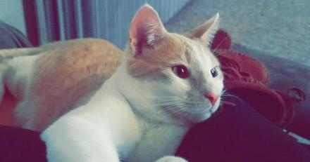 Le refuge euthanasie leur chat pour une raison vraiment horrible