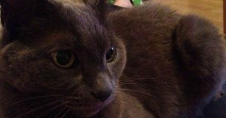 Le vétérinaire euthanasie son chat, un mois plus tard il réalise son énorme erreur