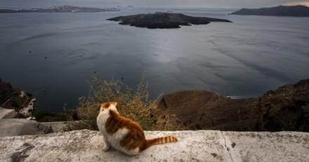 Ils voient un chaton en train de se noyer et appellent les secours : ils comprennent vite qu'ils sont surveillés