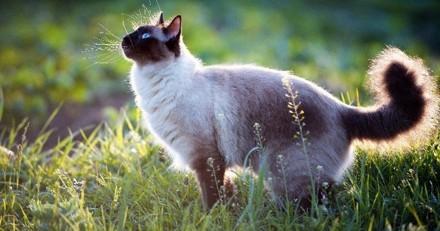 Prendre soin de son chat et protéger la petite faune sauvage