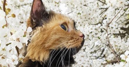 Cette chatte a l'un des visages les plus extraordinaires au monde !