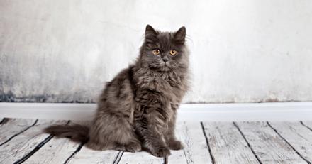 Pourquoi ne peut-on pas dresser un chat comme un chien ?