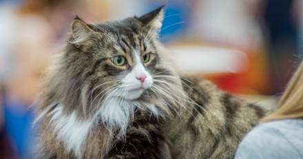 Son chat change de comportement et reste collée à elle, quand elle comprend pourquoi elle a les larmes aux yeux