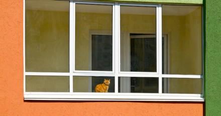 Les voisins donnent l'alerte : la police entre dans l'appartement et comprend que la situation est urgente