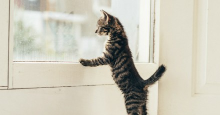 Elever un chat : est-ce possible ? - Apprentissage du chat