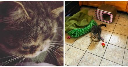 Abandonnée car elle était différente, cette chatte a trouvé la famille parfaite
