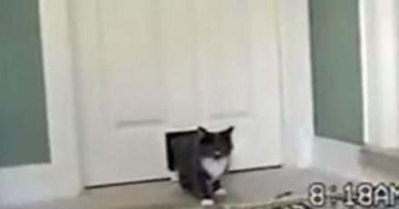 Leur chat rentre à la maison avec un ami si particulier qu'ils n'en croient pas leurs yeux (Vidéo)