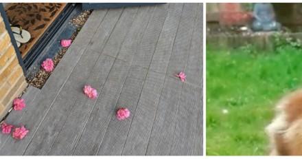 Chaque jour, elle découvre une fleur rose dans son jardin et quand elle découvre la vérité c'est le choc