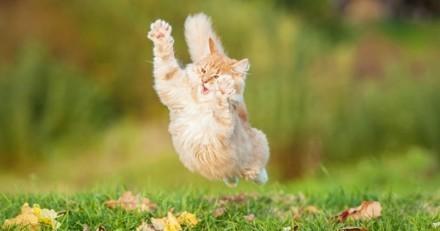 Que faire quand mon chat a son quart d'heure de folie ?