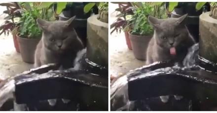 Ce chat n'a pas tout à fait compris comment boire dans la fontaine (Vidéo du jour)