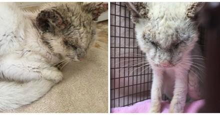 Elle recueille un chat aveugle et quand il ouvre les yeux, elle n'en revient pas
