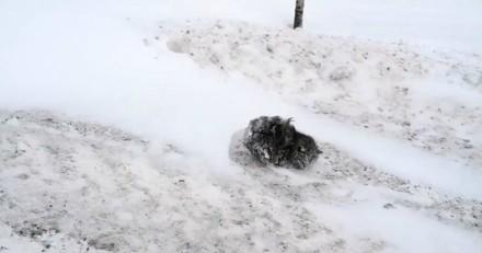Il croit voir un caillou au milieu de la neige, mais ce qu'il découvre est très différent