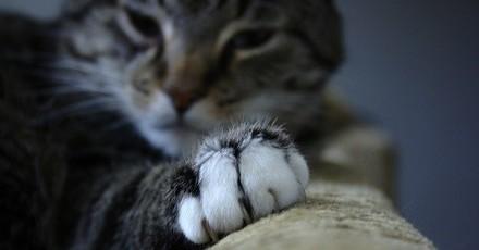 Pourquoi et comment couper les griffes de son chat ?