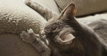 Mon chat fait ses griffes sur mes meubles, que faire ?
