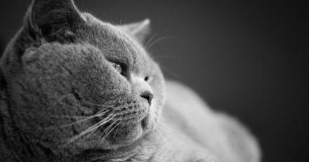 Ce chat un peu pompeux a perdu toute sa dignité en découvrant son nouveau jouet insolite