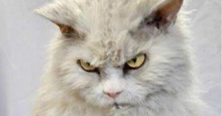 Ce chat grognon va illuminer votre journée (Vidéo du jour)