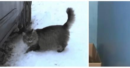 Elle entend un chat crier au sous-sol, jamais elle n'oubliera ce qu'elle y a découvert (Vidéo)