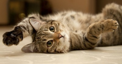 5 idées reçues sur ce qui rend nos chats heureux
