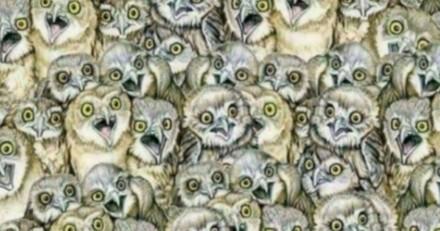 Un chaton se cache parmi les hiboux. Seuls les gens avec une excellente vue le voient !