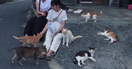 Mystère : la population féline de l'île aux chats divisée par trois en 5 ans