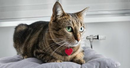 Au beau milieu de la nuit, son chat bondit sur lui et le sauve d'une mort certaine
