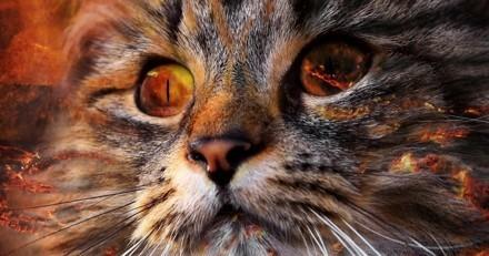 Les pompiers sauvent un chat d'un incendie grâce à un masque à oxygène