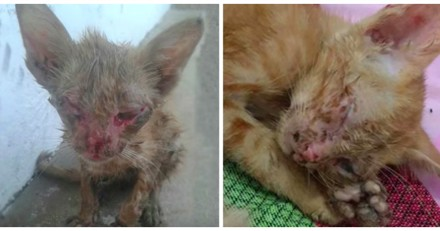 Tout le monde passait devant ce chaton en danger sans l'aider jusqu'à ce qu'un homme change tout (Vidéo)