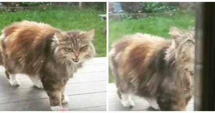 Chaque jour, cette chatte rapporte un cadeau à ses voisins, et pas n'importe quel cadeau ! (Vidéo du jour)