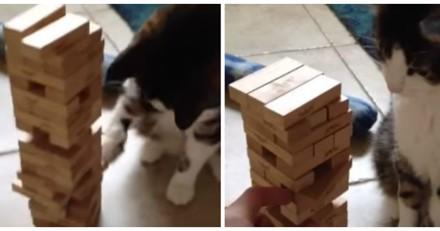 Ce chat joue au Jenga comme un vrai pro et c'est impressionnant (Vidéo du jour)