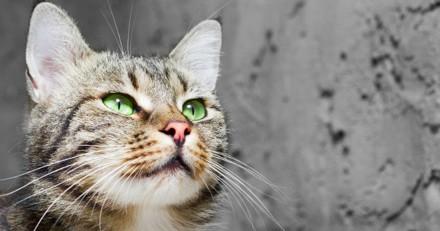 Elle balance son chat par la fenêtre, devant le juge son explication est à peine croyable