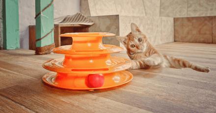 Les meilleurs jouets interactifs pour chat en 2021