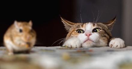 Ces chats ont échappé à l'euthanasie en trouvant le boulot de leur rêve