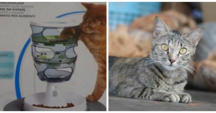 Le Bon Coin : il poste une annonce très marrante pour un jouet pour chat