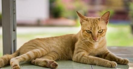 Le langage du chat : 9 signes décryptés pour mieux le comprendre