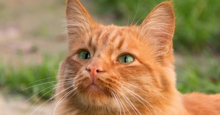 Il tue un chat à coups de pelle, et s'en tire avec 3 mois de prison avec sursis