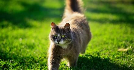 Ce chat a une passion vraiment (mais vraiment) très étrange (Vidéo)