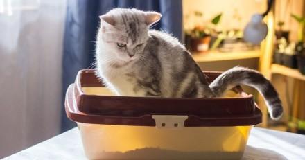 Mon chat a du sang dans les selles : pourquoi et que faire ?