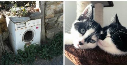 Ils sauvent des chatons retrouvés dans une machine à laver, et ont une grosse surprise plus tard !
