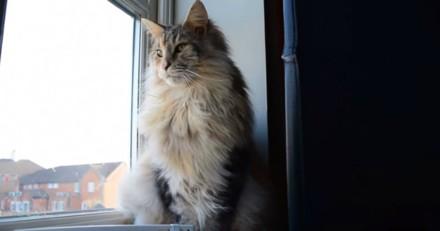Ce chat adore rester devant la fenêtre pour une excellente raison (Vidéo du jour)