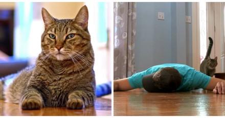 Il fait semblant de mourir pour voir la réaction de son chat, et n'en revient pas (Vidéo)