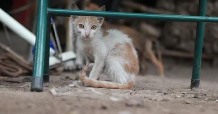 Alertés pour un sauvetage de chats, ils ne s'attendaient pas à découvrir cette scène d'horreur