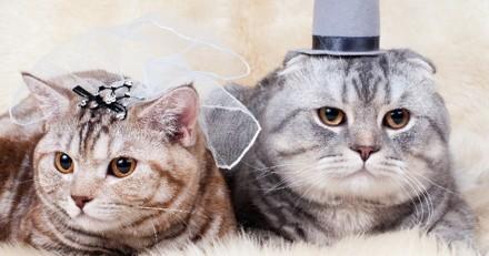 L'invitation au mariage de ce couple de chats a fait craquer les internautes