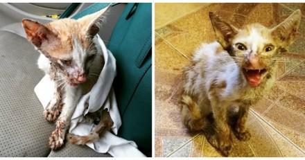 Le vétérinaire suggère d'euthanasier un chat mourant, quelques jours plus tard il a le choc de sa vie