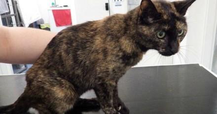 Elle soigne le cancer de son chat avec du miel et reçoit une lourde condamnation