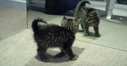 Ce chat devient totalement fou en se regardant dans un miroir (Vidéo du jour)