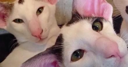 Ces chats adorent prendre la pose, et ils sont très doués (Vidéo du jour)