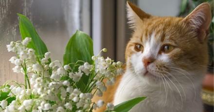 Le muguet et les chats, chiens et rongeurs : une association qui peut être mortelle !