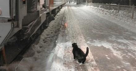Ce chat se rend tous les soirs à la gare à 22h40 depuis des années : il a une excellente raison de le faire